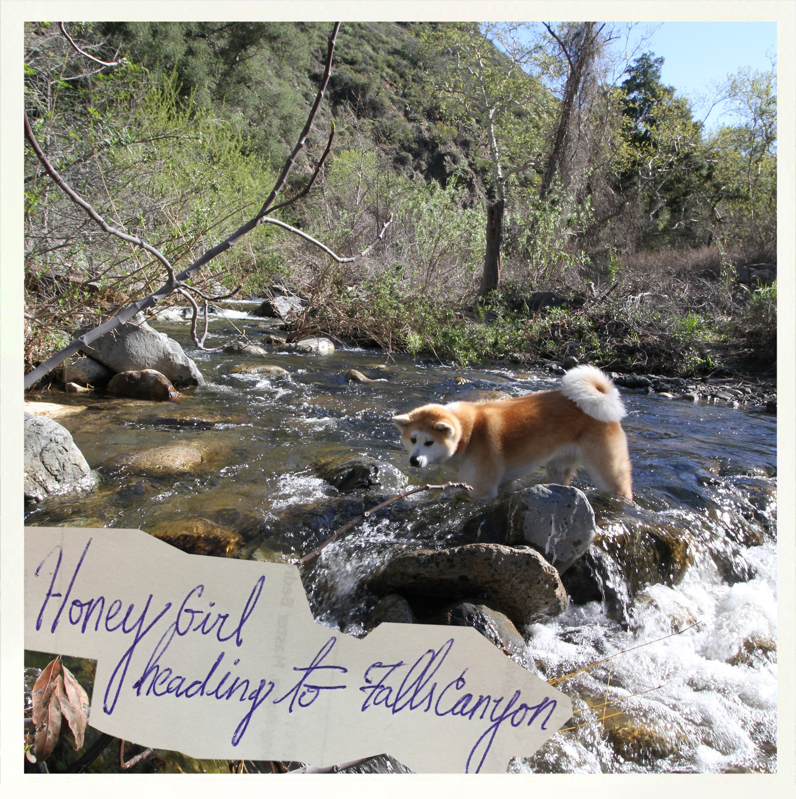 falls-canyon-honeygirl